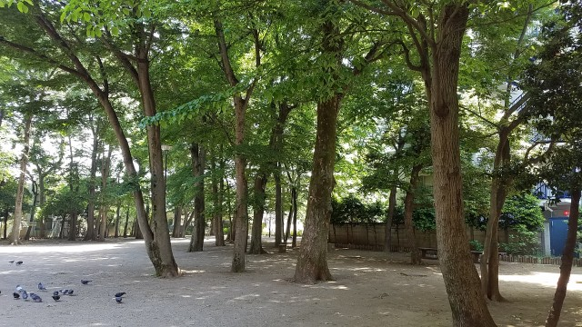 20180506_112414丸山塚